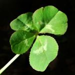 good_luck_