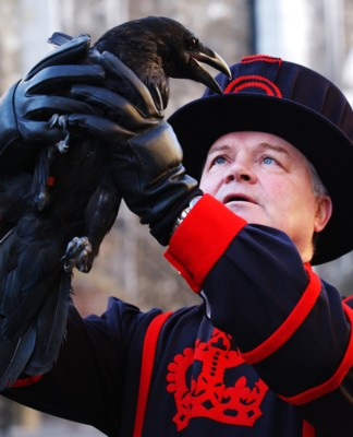 Raven with Beefeater at the Tower of London