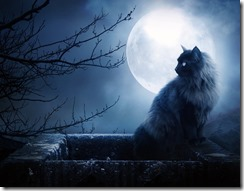 full-moon-black-cat